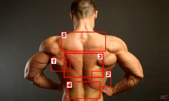 Dizontogenez du service de poitrine de lépine dorsale