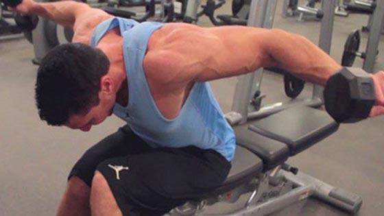 Free Programme Pdf Musculation Download Seche