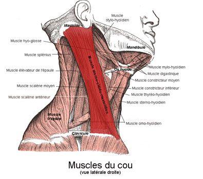 Les douleurs à urinaire et le dos