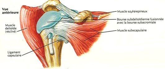 Les tendinites de l'épaule